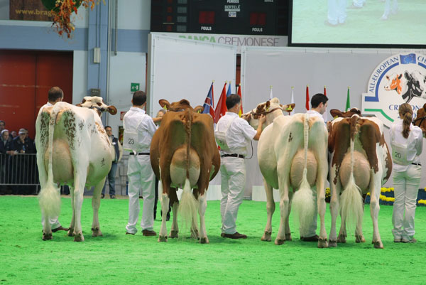 Holstein Plaza  Top Genomics charts